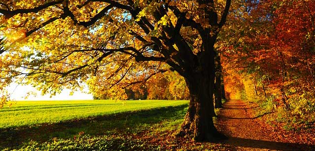 Sonnige Herbst-Allee. Neben einem grünen Feld führt ein laubbedeckter von Bäumen eingesäumter Weg am Wald entlang. Das Herbstlaub leuchtet bunt in der Sonne.