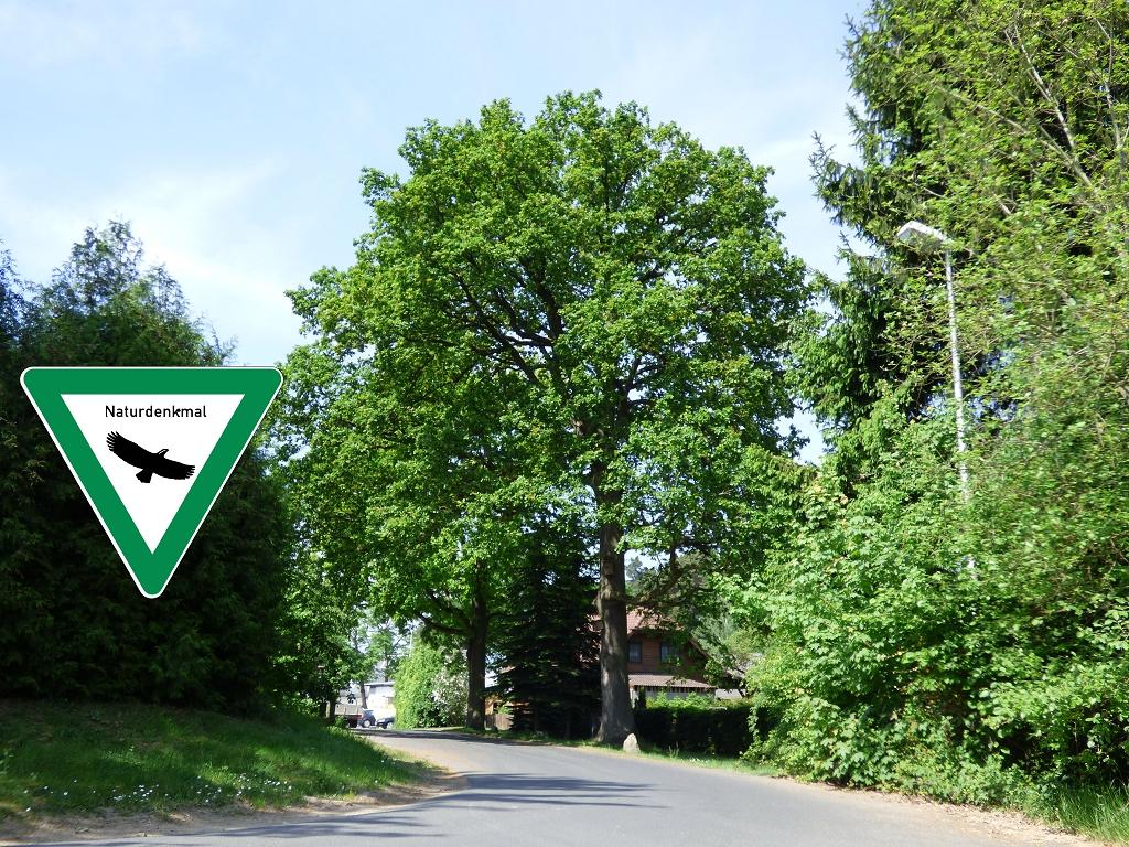 Naturschutzdenkmal Melberstraße