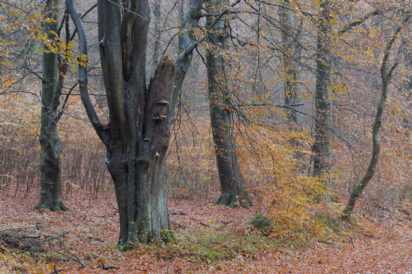 "Wolfgang Steinborn ""Herbstwald B"""
