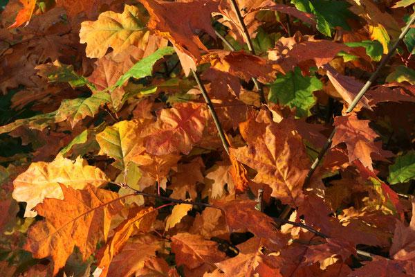 """Lothar von Alm """"Herbstlaub"""""""