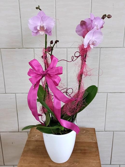 Orchidee aufgeputzt rosa - € 35,-