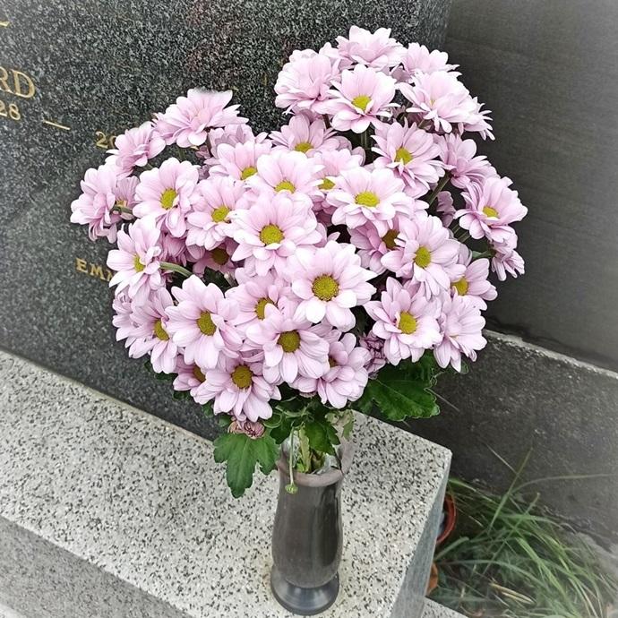 F08: Chrysanthemen - € 13,-