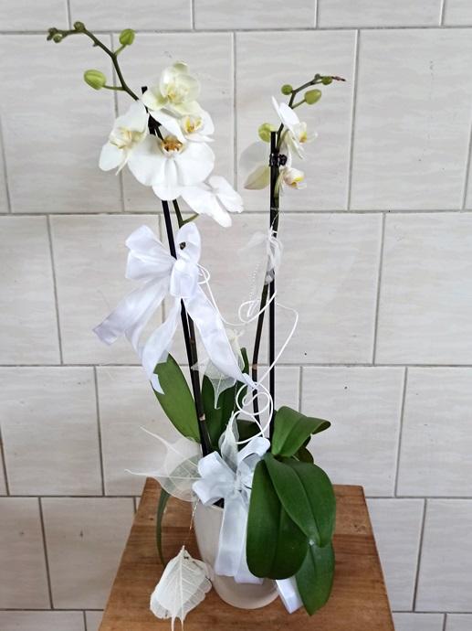 Orchidee aufgeputzt weiß - € 35,-