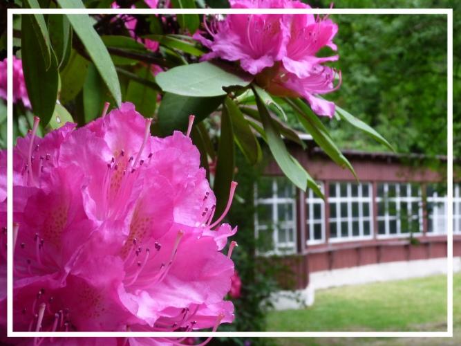 die Liegehalle zur Rhododendronblüte