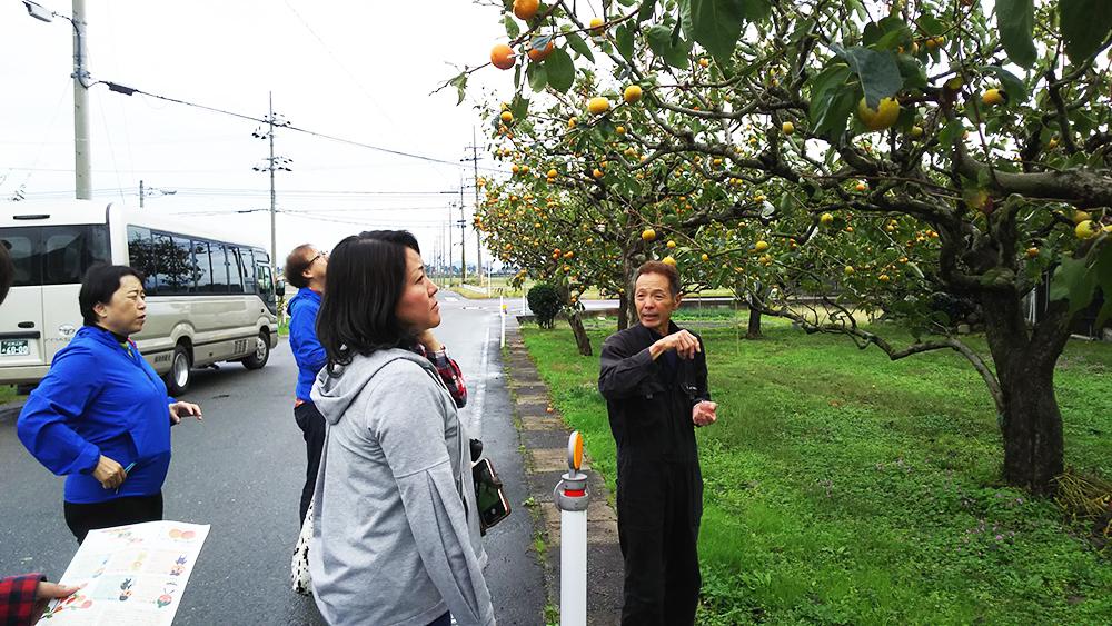 岡本富有園(柿食べ比べ)