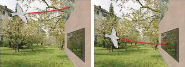 Links: Die Fenster über Eck sind für Vögel unsichtbar. Rechts: Die Spiegelung sieht wie ein Garten aus.