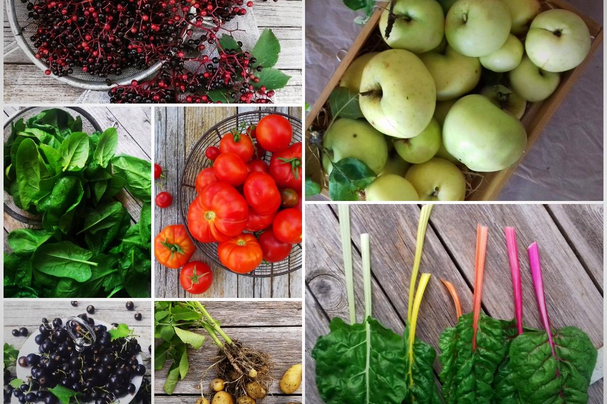 6 gr nde warum man obst gem se selber anbauen soll food stories foodblog mit veganen und. Black Bedroom Furniture Sets. Home Design Ideas