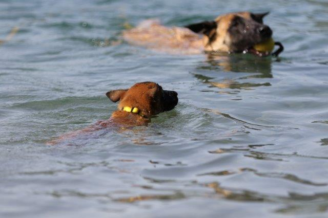 Frau Gelb geht selbstsicher ins Wasser