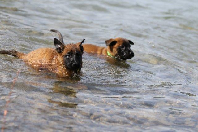 und überzeugt Frau Grün, dass Schwimmen toll ist