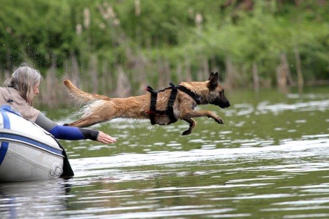 Sprung vom Boot