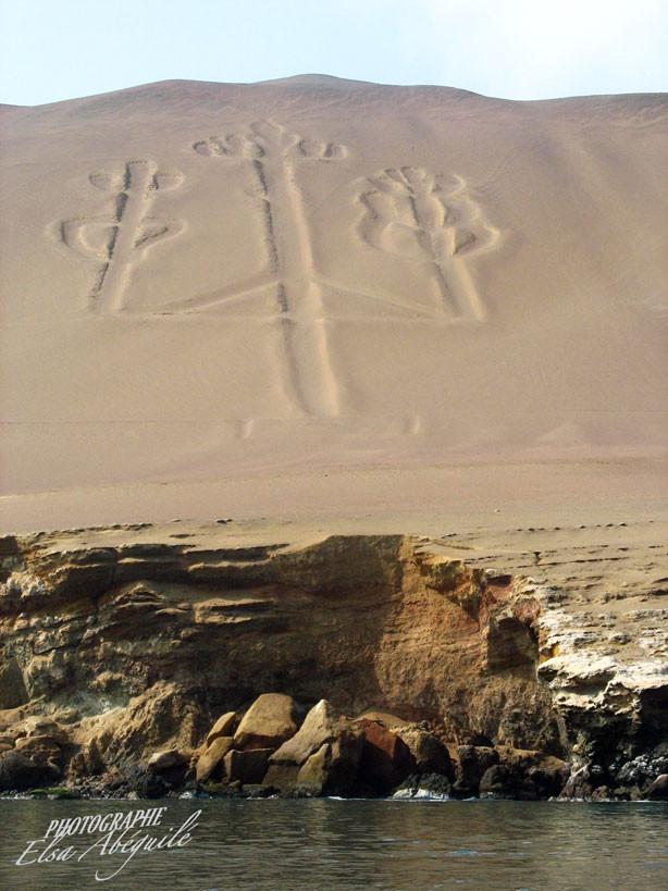 Représentation du cactus sacré sur les dunes de sable inaltérée depuis de très très nombreuses années.
