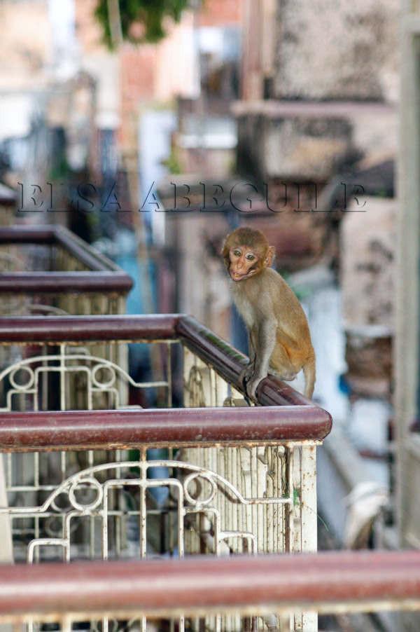 Varanasie