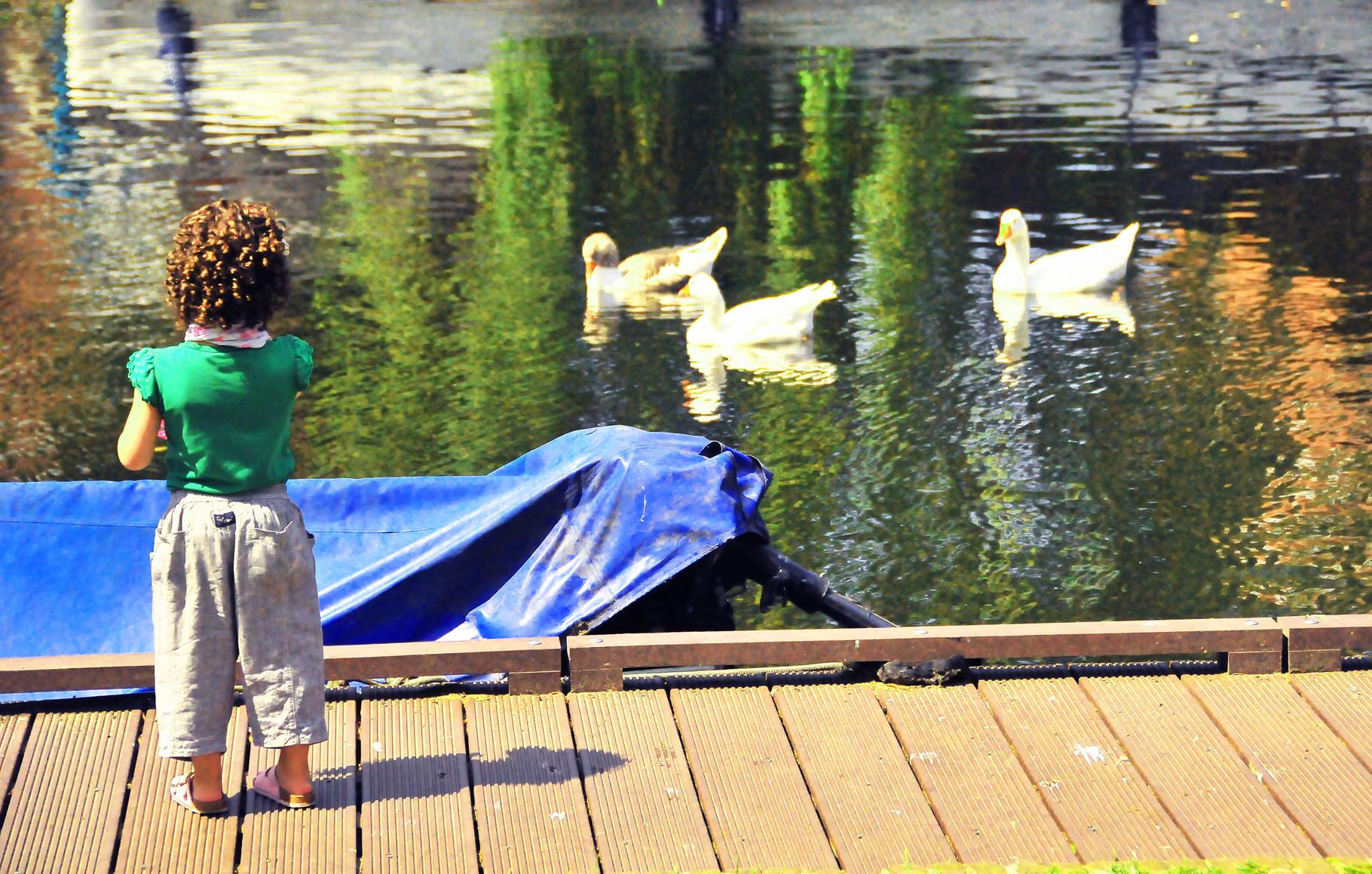 5 Duck Tales