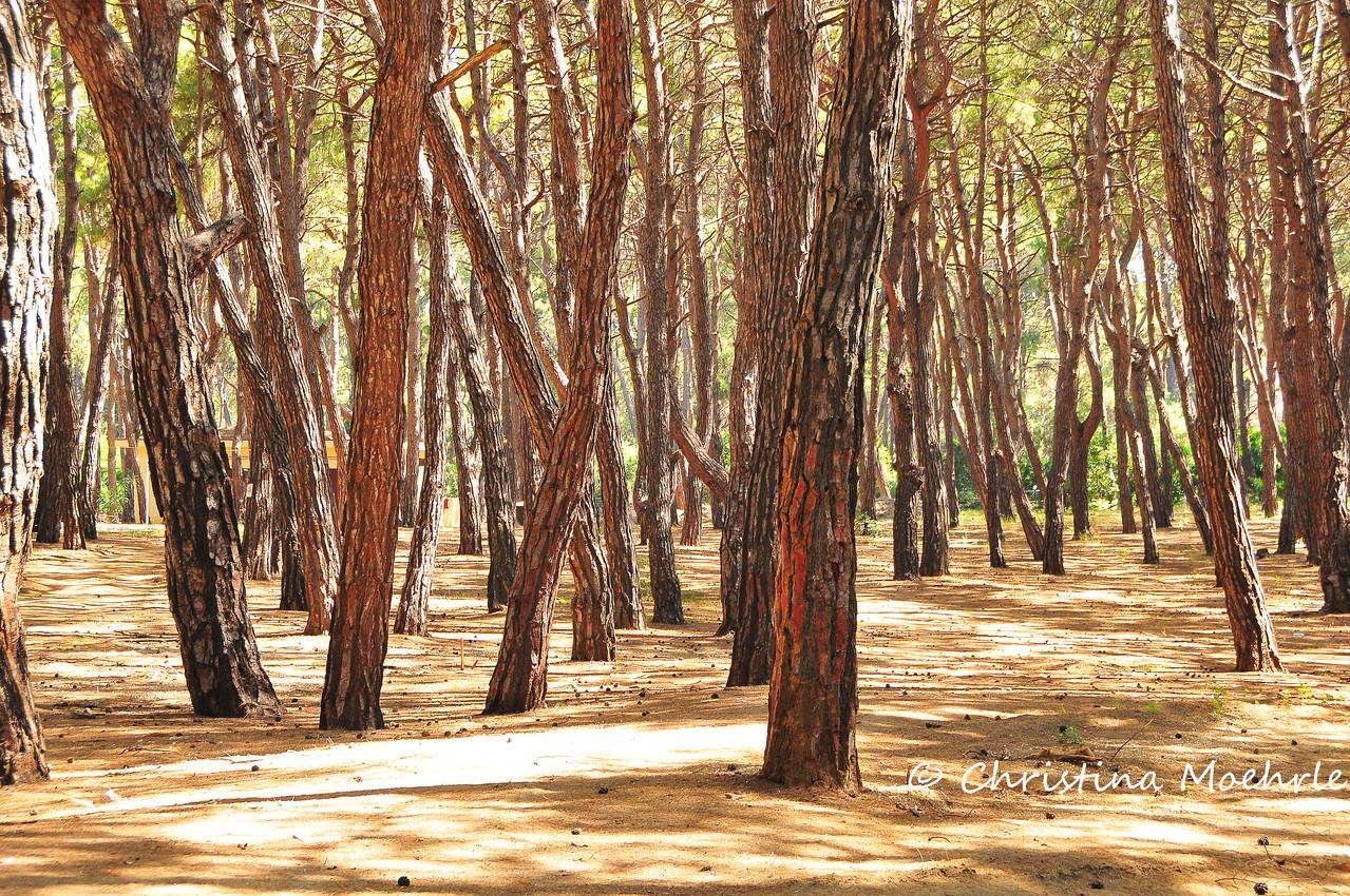 Robinson Pines
