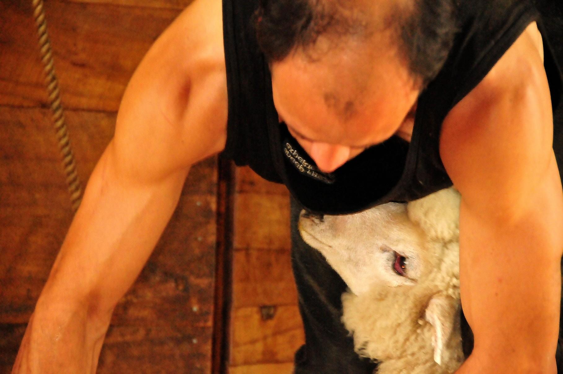 Trusted Shepherd
