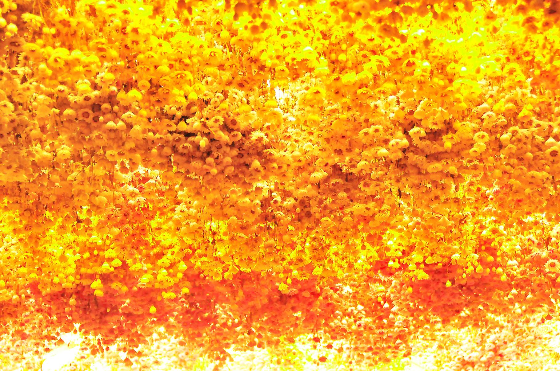 66 Golden Ceiling
