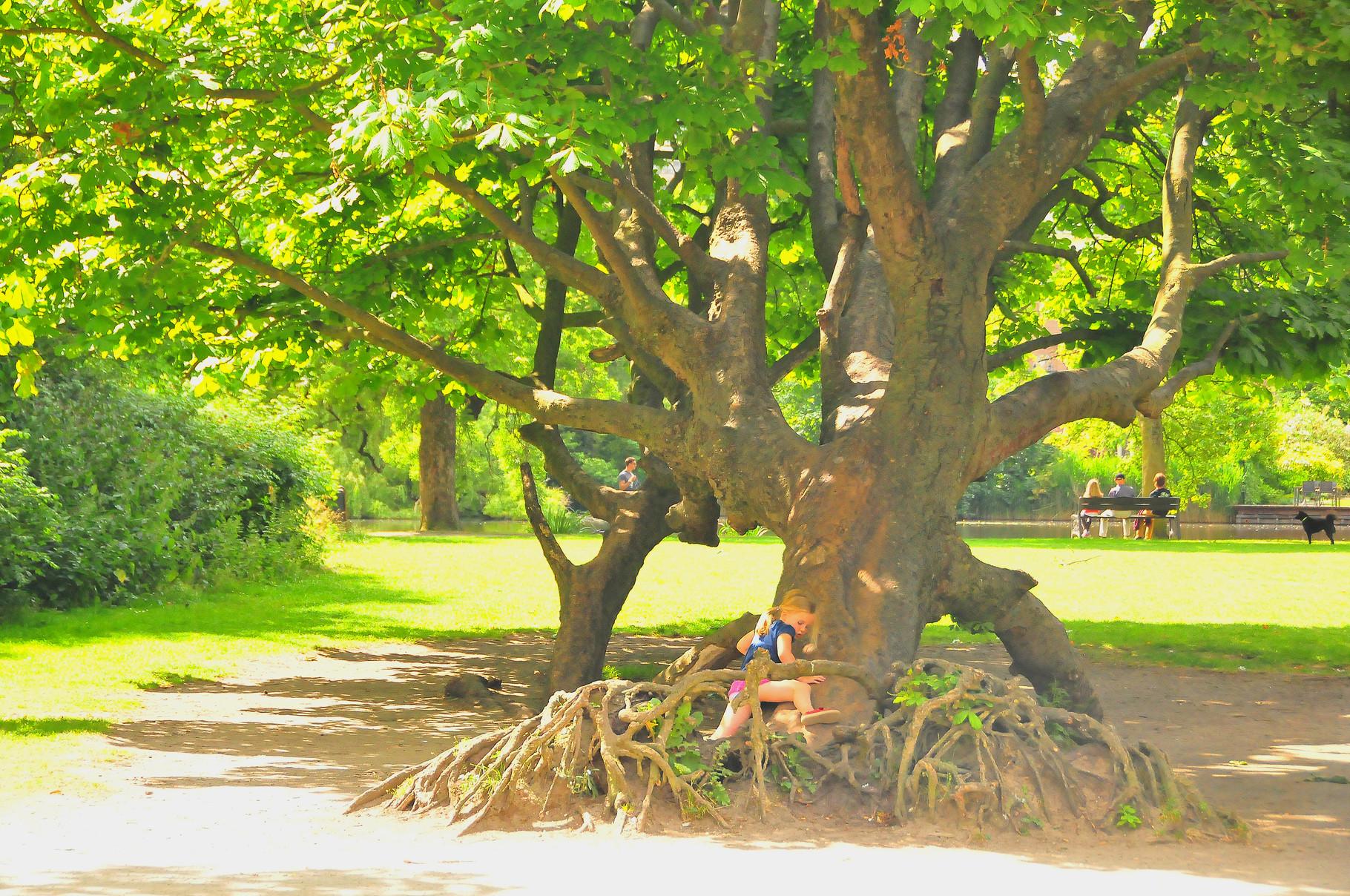 109 Little Tree Hugger