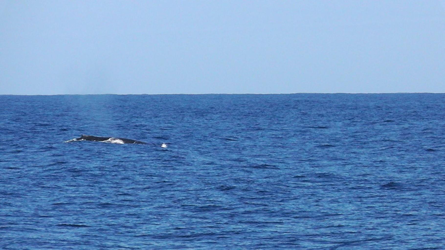 Wale schauen