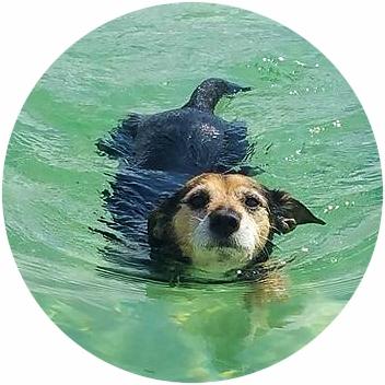 Baignade au lac d'Annecy !