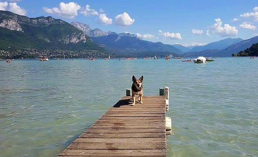 Au lac d'Annecy vous pouvez louer un pedalo et faire montez votre petit chien dessus pour un moment convivial garanti entre maître et chien !