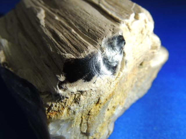黒いジャスパー化している珪化木