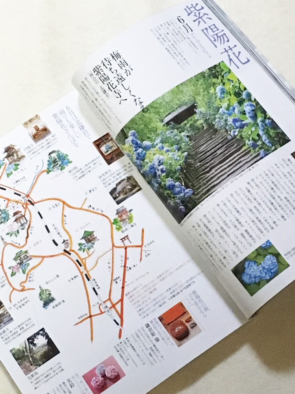 婦人画報 3月号 紫陽花の角皿