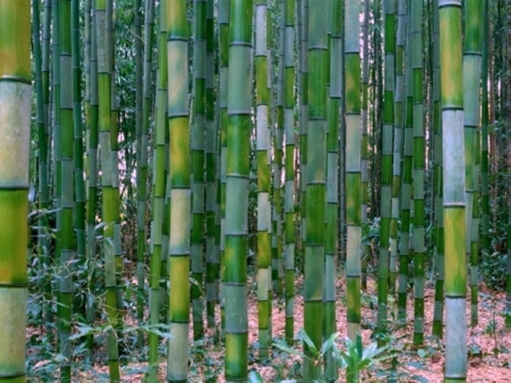 Vitalpflaster Bambuspflaster Biz