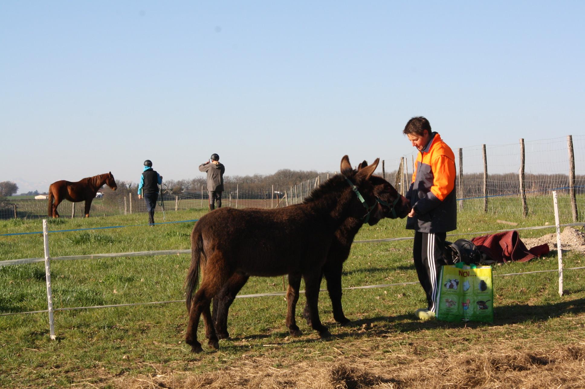 nos ânes partagent leur prairie avec les chevaux de randonnée