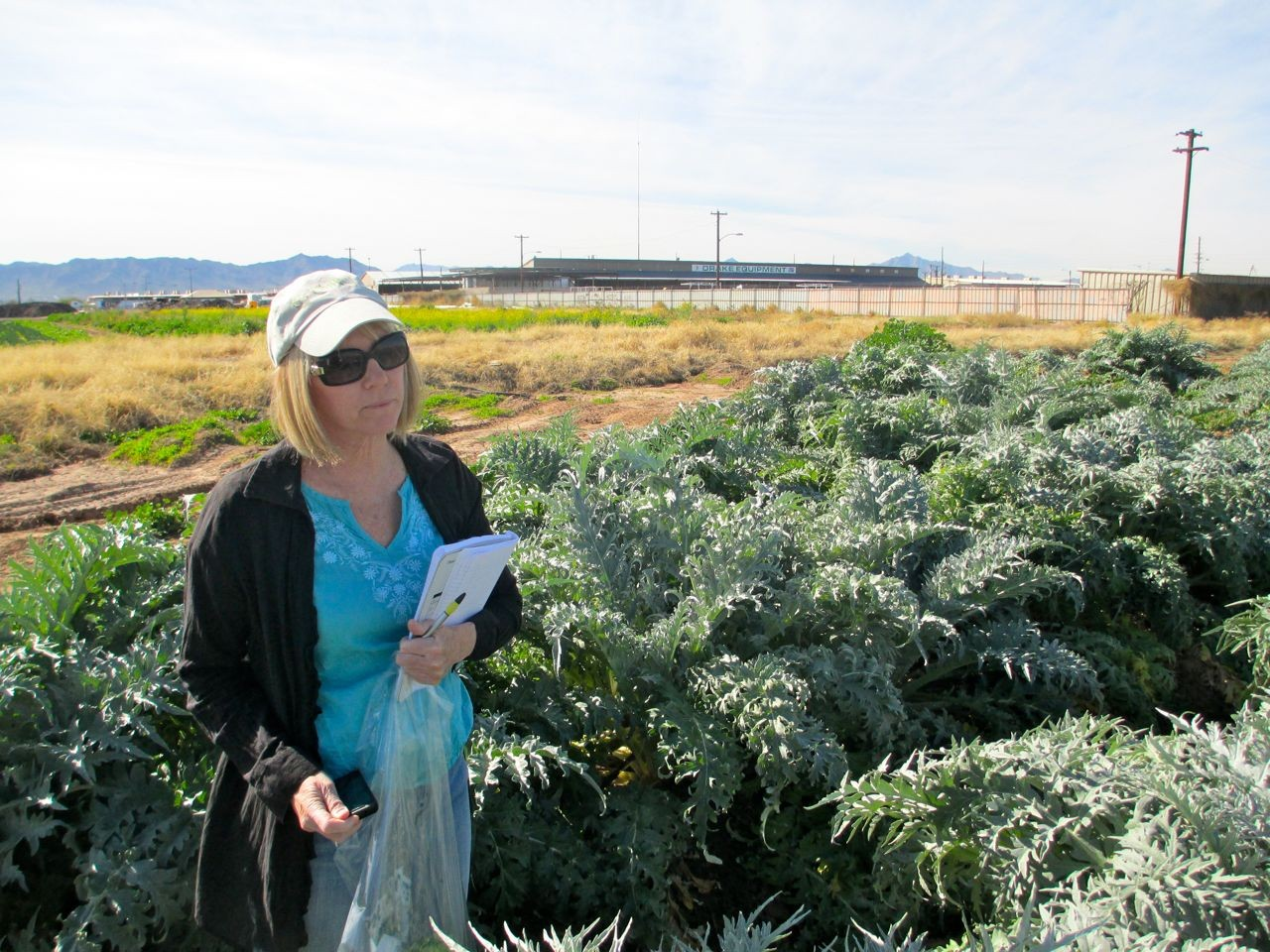 Belinda Amidst the Artichokes