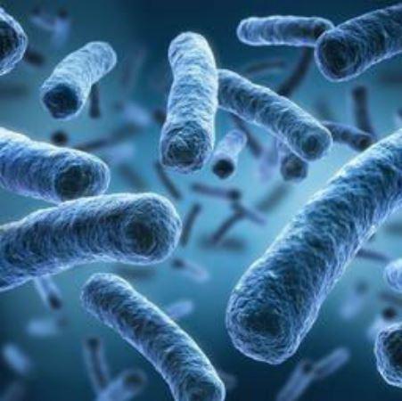 Gegen Bakterien und sonstige Erreger