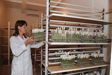 Биотехнологическая лаборатория