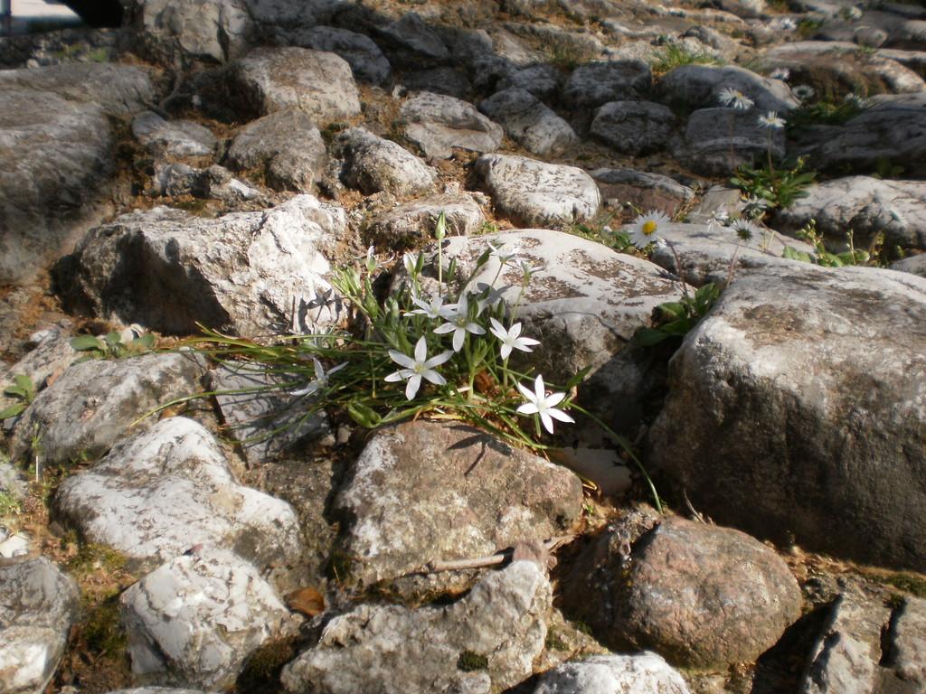 И на камнях растут цветы)))