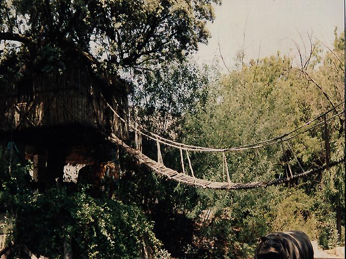puente de lianas / parque atracciones