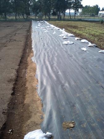 織布系防草シート畦使用例