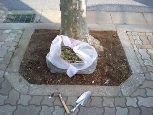 街路樹周りの除草作業