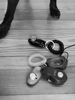 Clickertraining Clicker Hundetraining Weltstadt mit Hund
