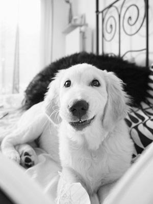 Welpe oder alter Hund: Alles rund um die Stubenreinheit