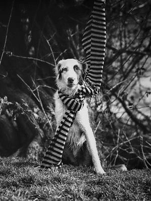 Der Tierschutzhund