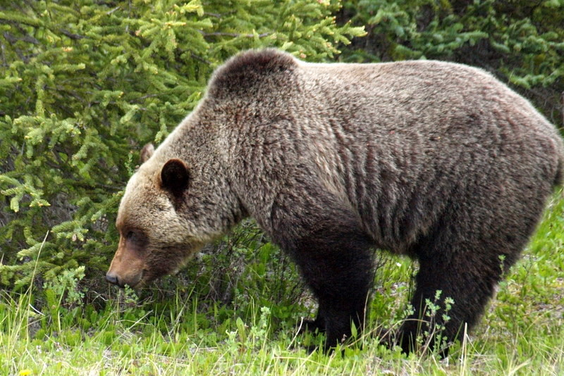 Endlich - ein Bär!
