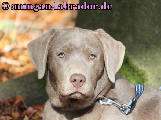 Die ersten Tage im Leben eines Hundewelpen :: Westie