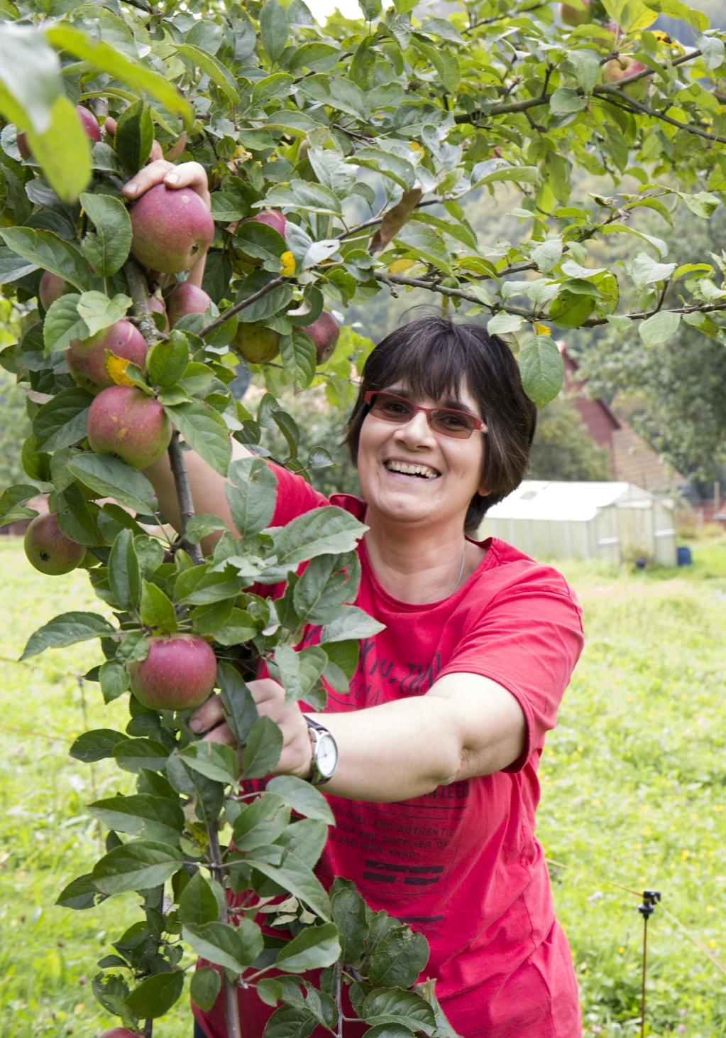 """Die Äpfel sind für unsere Fruchtbrotaufstriche : """"Apfel-Zimt"""", """"Apfel-Vanille"""", """"Apfel-Rose,"""" """"Apfelwein"""", """"Apfel-Minze"""""""
