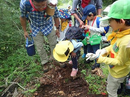 蟻の巣発見