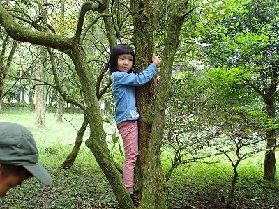 木登り挑戦