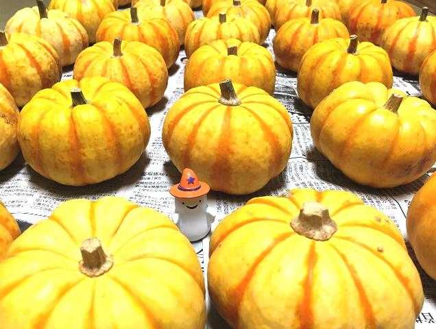 かぼちゃ届いて保管中