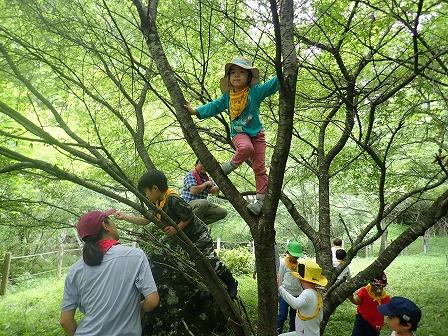 木登り大成功