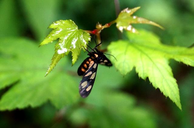 雨宿りをする昆虫
