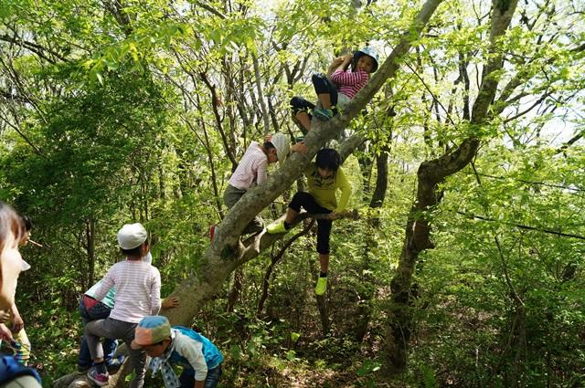 木登りだってしちゃう!