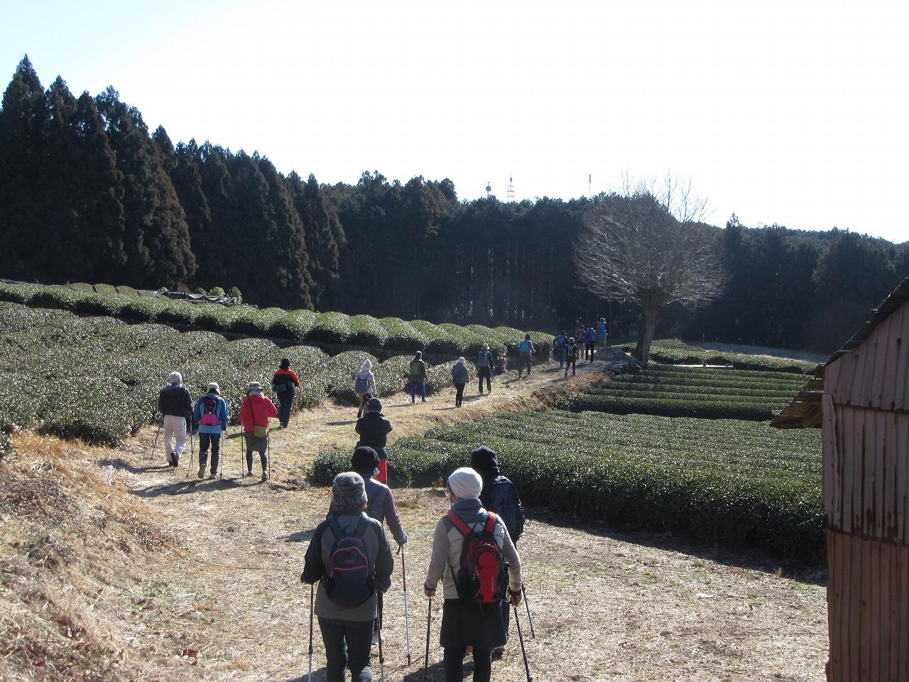 茶畑小道2