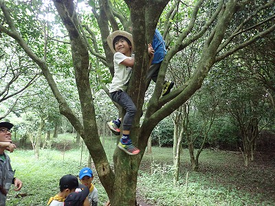 木登り二人で挑戦