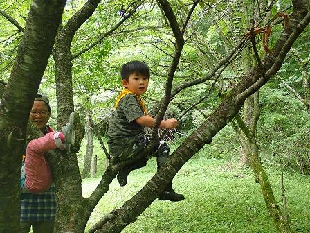 木登りきもちいい